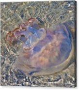 Jellyfish Acrylic Print by Betsy Knapp