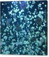 Jellyfish Collage Acrylic Print
