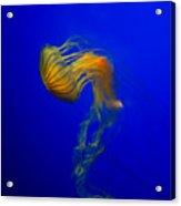 Jellyfish From The Deep Blue Acrylic Print by Nila Newsom