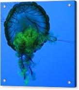 Jellyfish In Green Acrylic Print
