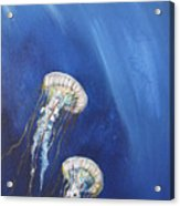 Jellyfish In Unison Acrylic Print