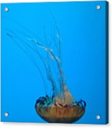 Jellyfish Art Acrylic Print