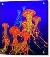 Jellys4 Acrylic Print