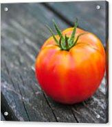 Jersey Fresh Garden Tomato Acrylic Print