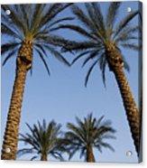 Jerusalem Palms Acrylic Print