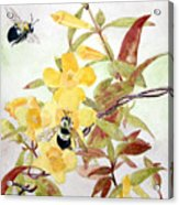 Jessamine Bee Mine Acrylic Print