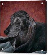 Jessie Acrylic Print