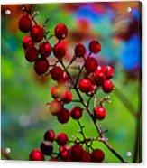 Jessies Berries Acrylic Print