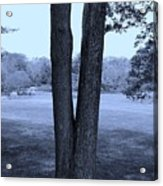 Jesus Christ Tree Cyan Acrylic Print