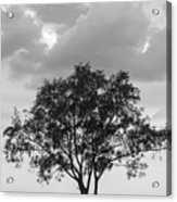 Jetty Tree Acrylic Print