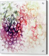 Jewels On The Vine Acrylic Print
