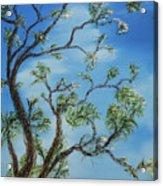 Jim's Tree Acrylic Print