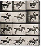 Jockey On A Galloping Horse Acrylic Print