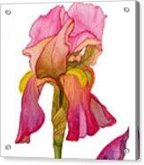 Jody's Iris Acrylic Print