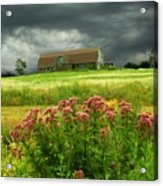 Joe Pye Weed And Barn Acrylic Print