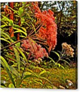 Joe-pye-weed Near Schroon River In New York Acrylic Print