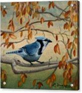 Joe's Jay Acrylic Print