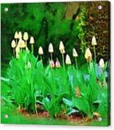 Joe's Tulips Acrylic Print