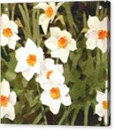 Jonquills Acrylic Print