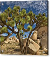 Joshua Tree And Blue Sky Acrylic Print