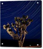 Joshua Tree And Star Trails Acrylic Print by Steve Gadomski