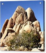 Joshua Tree Center Acrylic Print