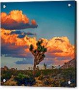 Joshua Tree In All Its Beauty Acrylic Print