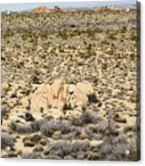 Joshua Tree National Park - Joshua Tree, Ca Acrylic Print