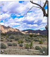 Joshua Tree National Park Landscape Acrylic Print