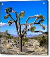 Joshua Tree National Park Winter's Day Acrylic Print
