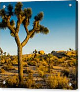 Joshua Tree Panoramic Acrylic Print