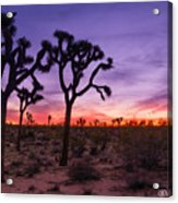 Joshua Tree Pastel Colors Acrylic Print
