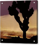 Joshua Tree Silo At Sunset Acrylic Print