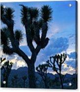 Joshua Tree Sunset Skies Acrylic Print