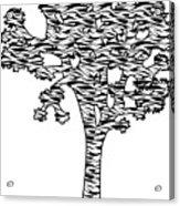 Joshua Tree Zebra Stripes Acrylic Print