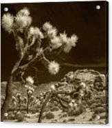 Joshua Trees And Boulders In Infrared Sepia Tone Acrylic Print