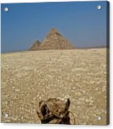 Journey Into The Desert Acrylic Print