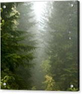 Journey Through The Fog Acrylic Print