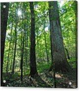 Joyce Kilmer Forest Acrylic Print