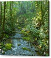 Joyce Kilmer Memorial Forest Acrylic Print