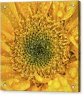 Joyful Color Nature Photograph Acrylic Print