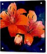Joyful Lilies Acrylic Print