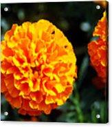 Joyful Orange Floral Lace Acrylic Print