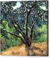 Juan Bautista De Anza Trail Oak Acrylic Print