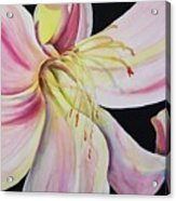 Jubilant Lily Acrylic Print
