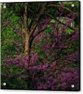 Judas In The Forest Acrylic Print