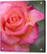 Judys Rose Acrylic Print