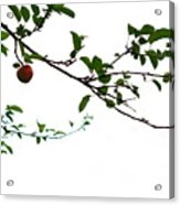 Juicy   A Tempting Photograph Of A Tasty Ripe Red Apple On A Tree  Acrylic Print