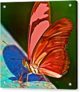 Julia Heliconian Butterfly In Iguazu Falls National Park-brazil Acrylic Print