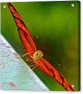Julia Heliconian Butterfly Spreading Its Wings In Iguazu Falls National Park-brazil  Acrylic Print